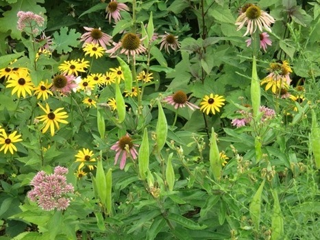 6 Tips for Designing With Native Plants | gardening and weather | Scoop.it