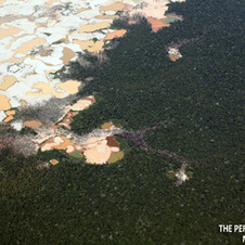 Global Forest Watch | Peruvian Amazon | Scoop.it