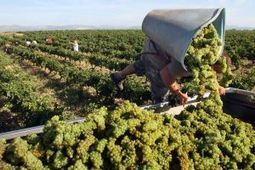 Climate change threatens French wine | Vitabella Wine Daily Gossip | Scoop.it
