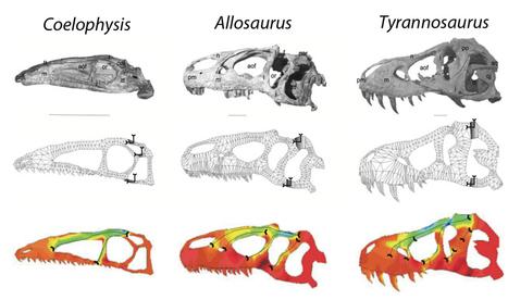 My PhD: Part 3: the return of the ichthyosaurs | Computational Biomechanics in Palaeontology | Scoop.it