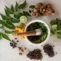 Τα φαρμακευτικά φυτά υπό διωγμό! Η παγκόσμια υγεία στο βωμό του κέρδους… | ΚΙΝΔΥΝΟΙ ΥΓΕΙΑΣ | Scoop.it