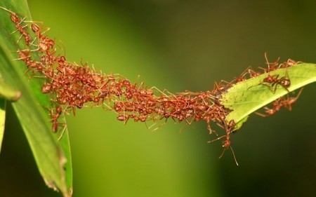 What Ant Colony Networks Can Tell Us About What's Next for Digital Networks | Biomimicry | Scoop.it