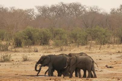 Le Zimbabwe vend ses animaux sauvages pour les sauver de la sécheresse | Biodiversité & Relations Homme - Nature - Environnement : Un Scoop.it du Muséum de Toulouse | Scoop.it