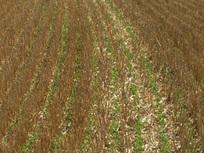Le semis direct sous couvert : une solution contre l'appauvrissement des sols | semis direct | Scoop.it