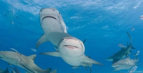 Why We Need Sharks - Sea Shepherd | All about water, the oceans, environmental issues | Scoop.it