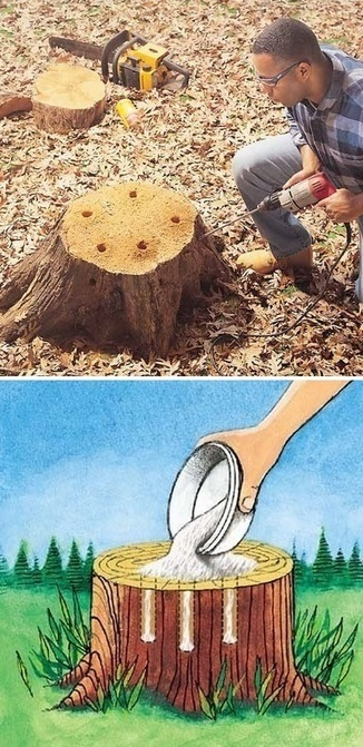 Tree Stumps Removal | Backyard Gardening | Scoop.it