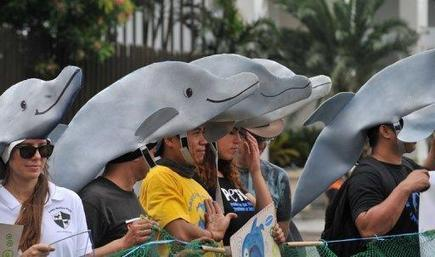 A REALLY DISGUSTING NEWS!: Philippine court lifts order preventing export of dolphins to S'pore - Channel NewsAsia   Earth Island Institute Philippines   Scoop.it