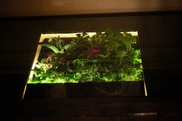Terrarium Desk brings the outdoors indoors   Container Gardening   Scoop.it