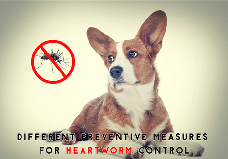 Different Preventive Measures for Heartworm Control in Pets | Pet Care | Scoop.it