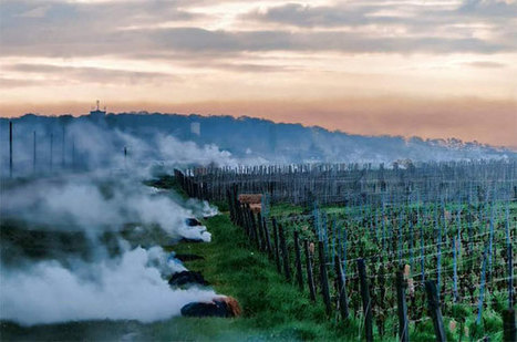 #Burgundy hit by 'worst frost since 1981' | Vitabella Wine Daily Gossip | Scoop.it