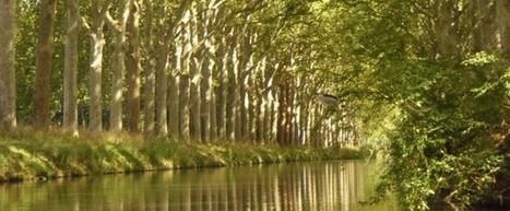 Canal du Midi. Les premiers abattages de platanes en Haute-Garonne sont pour mars | Odyssea : Escales patrimoine phare de la Méditerranée | Scoop.it