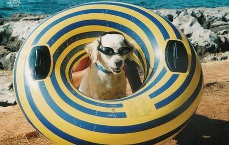 Le vacanze con il cane: alberghi e  spiagge dove portare l'amico a 4 zampe. | Olta news | Scoop.it