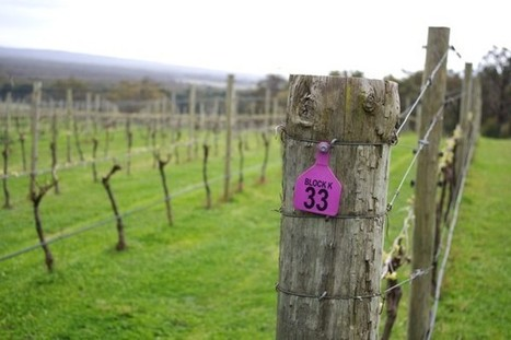 The wines of Bindi, Macedon Ranges, Victoria, Australia | Wine, history and culture... | Scoop.it