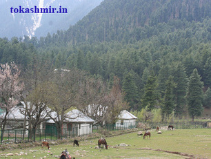 Kashmir tour packages | Indian Travel World | Scoop.it
