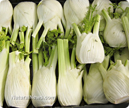Fennel can help neutralize cancer and encourage weight loss | UrbanCaveNews | Scoop.it