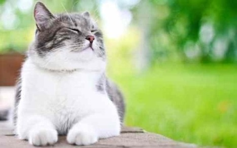 Cats: How Cats Show Their Happiness | Cats | Ask The Cat Doctor | Scoop.it