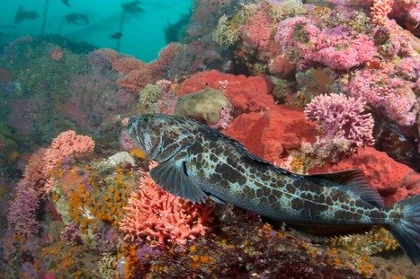 Take Action: Protect Ocean Habitat and Support Sustainable Fishing | EcoAction | Scoop.it