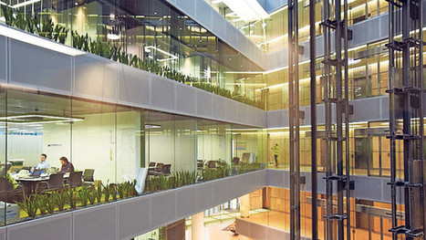 How plants at work can improve wellbeing and efficiency | Internet Partnership | Scoop.it