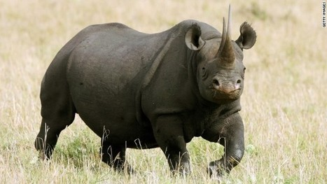 Winner of black rhino hunting auction justifying his actions | Saving All Animals | Scoop.it