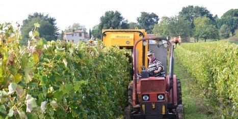 Le cognac prend racine en Dordogne | Agriculture en Dordogne | Scoop.it