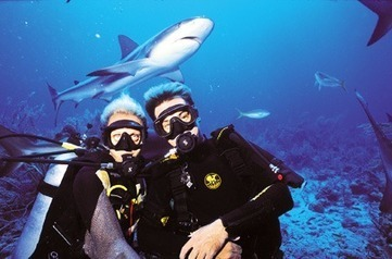 Sharks? Is all in your body language… | All about water, the oceans, environmental issues | Scoop.it