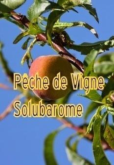 I.Vanessence: Arôme Pêche de Vigne Solubarome | De plume et d'écran | Scoop.it