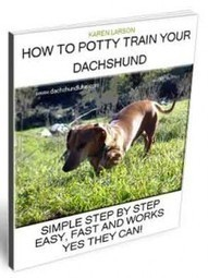 How To Potty Train Dachshunds   Dachshund Puppies And Older Dachshunds   Dachshunds   Scoop.it