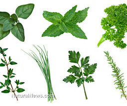 Five must-have herbs for healing your body and mind | Plant Based Nutrition | Scoop.it