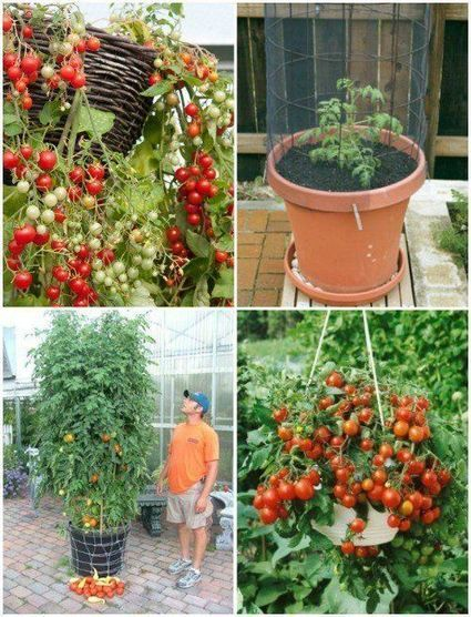 The 35 Easiest Container and Pot Friendly Fruits, Vegetables and Herbs - DIY... | Arts & Crafts | Scoop.it