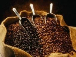 Légère progression des cours du café, avant une flambée que ... - Le Blog Finance (Blog) | Coffee Channel | Scoop.it