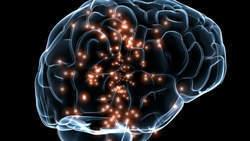 Pubergedrag toch niet veroorzaakt door 'onrijp brein' | Het brein | Scoop.it