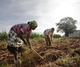 Accaparement mondial des terres agricoles en 2016 : ampleur et impact | Questions de développement ... | Scoop.it