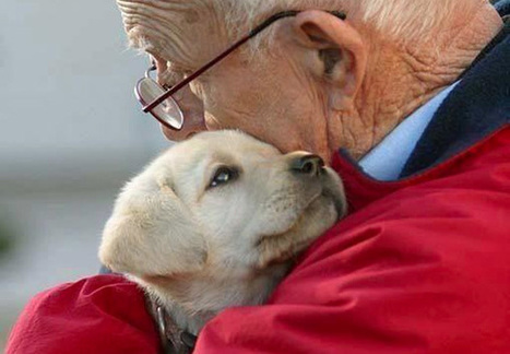 12 Photos of Therapy Dogs Providing Comfort After Tragedies | Dog behavior | Scoop.it