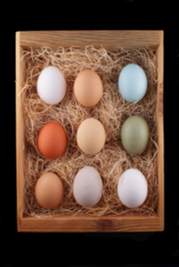 (EN) - Eggs: Types Of Eggs | thenibble.com | Glossarissimo! | Scoop.it