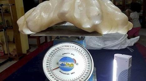 Philippines: Un pêcheur a caché une perle de 34 kilos sous son lit pendant dix ans | Biodiversité | Scoop.it