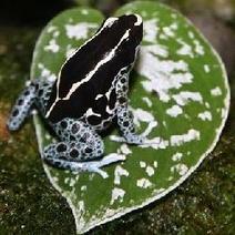Frog Pattern Math | intergenerational | Scoop.it