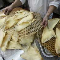 Shark Fins Going Out of Favor Among Young Chinese-Malaysians | Indigo Scuba | Scoop.it