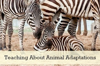 Teaching About Animal Adaptations | animal adaptations | Scoop.it