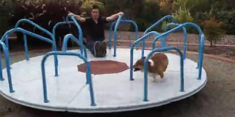 Un chien qui adore le tourniquet - dh.be | CaniCatNews-actualité | Scoop.it
