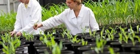Biotecnología Vegetal: cómo cambiará nuestras vidas | Agricultura y Ganaderia | Scoop.it