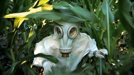 GMO OMG! The Story Behind the Movie | Searching for Safe Foods | Scoop.it