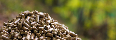 Wood Pellet Developments and the Relevance to U.S. Timberland Investments | Timberland Investment | Scoop.it