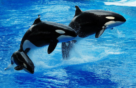 How a Gang of Bikers Plans to Rescue Whales from Captivity - TakePart | Honor the Orcas, Dive in! | Scoop.it