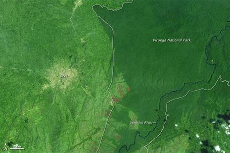 Wildlife Extra News - Virunga deforestation revealed by NASA photos | The Wild Planet | Scoop.it