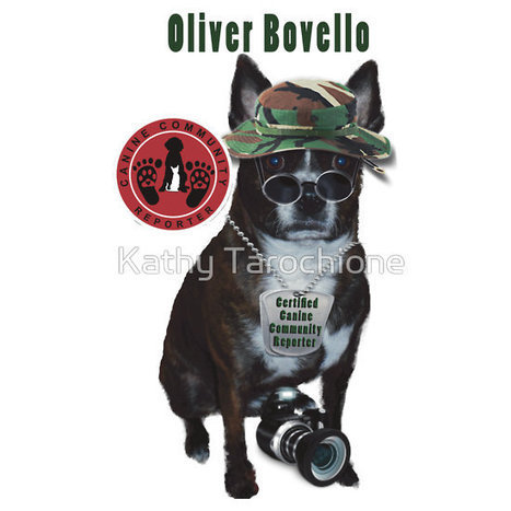 Oliver Bovello, Canine Community Reporter-Travel by Kathy Tarochione | Canine Community Reporter Oliver | Scoop.it