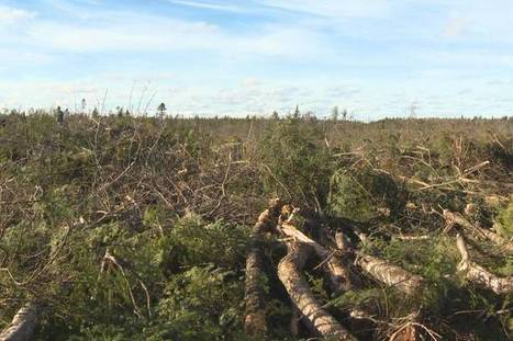 Expert panel member critical of Nova Scotia's clear cutting policy | Nova Scotia Hunting | Scoop.it