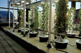 Le jardin potager vertical – Le vertical pour une culture idéale ? - TubeVegetal | Vertical garden | Scoop.it