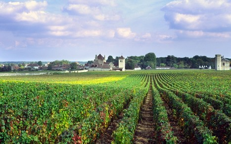 French winemakers concerned over 'chateau' change  - Telegraph | In The Vineyard | Scoop.it