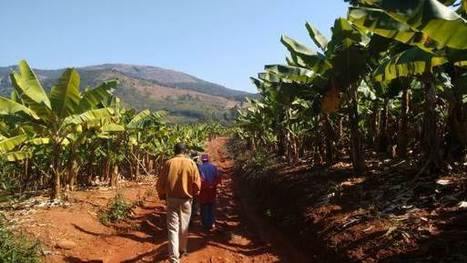 Fleeing drought, climate migrants press Zimbabwe's fertile east | Sustain Our Earth | Scoop.it