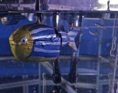Robotic fish is accepted by real fish - SlashGear | The Robot Times | Scoop.it